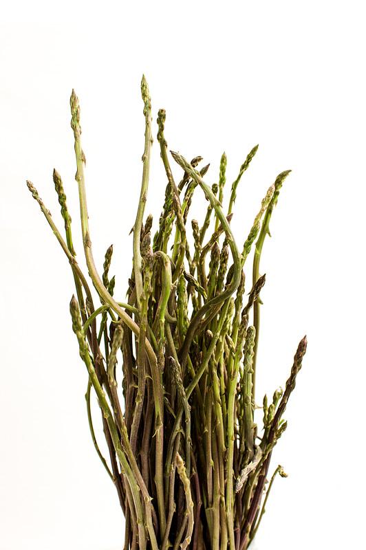 Divji šparglji / Wild asparagus