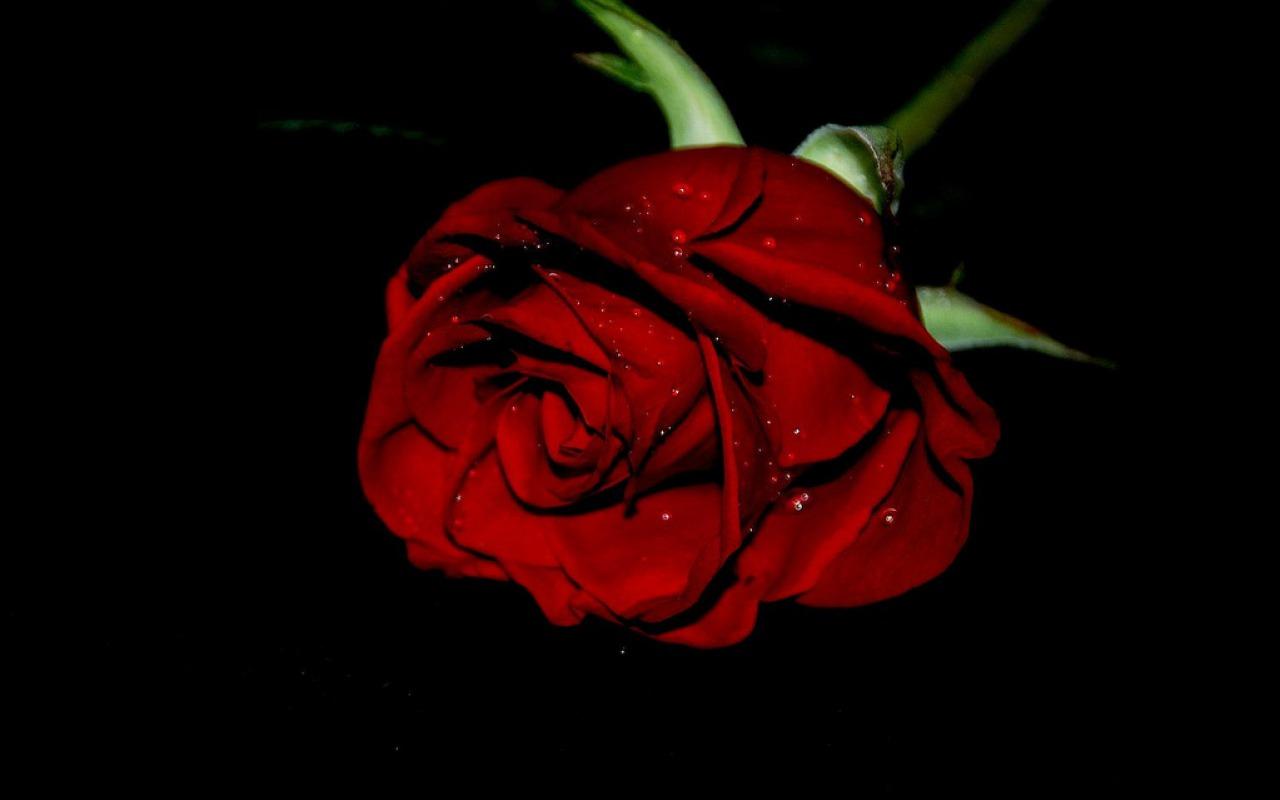 http://1.bp.blogspot.com/-QdAdGgYcGoI/UQJt1qe5R-I/AAAAAAAAGZs/WfJ44OZE5vs/s1600/trandafir.jpg