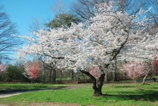 El Árbol Fuente de vida. Poesía corta día del Árbol, para escuelas, preescolares, comunidad, acto del día del árbol, poema corto para niños.