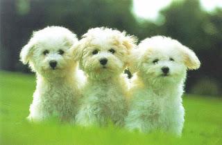 Imagenes de perritos tiernos