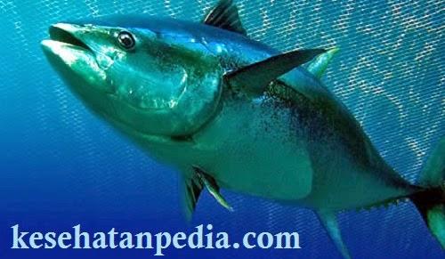 Kandungan Gizi Ikan Tuna