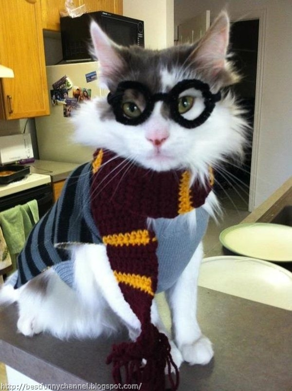 Cute and funny pictures of animals 36 top 20