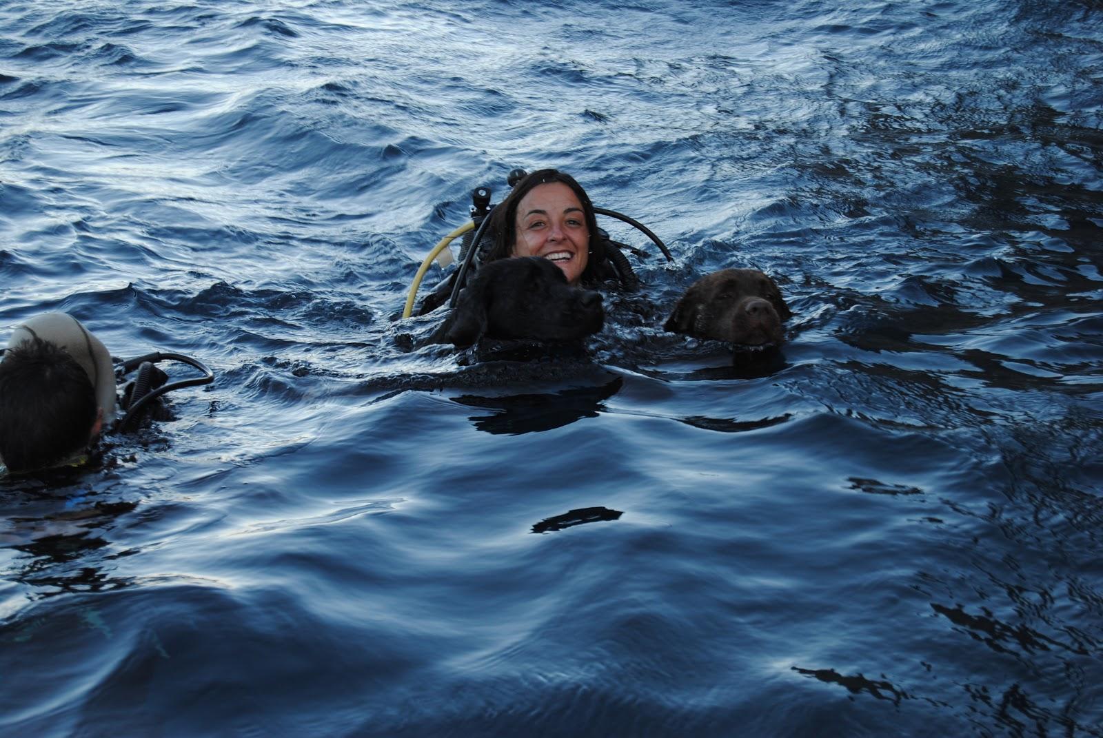 Dogsonboard anche fido diventa velista in immersione - Dive per sempre ...