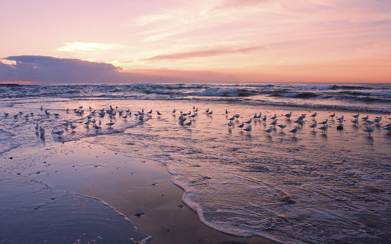 Чайки и море