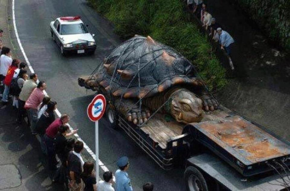 prince downloads worlds largest tortoise pic