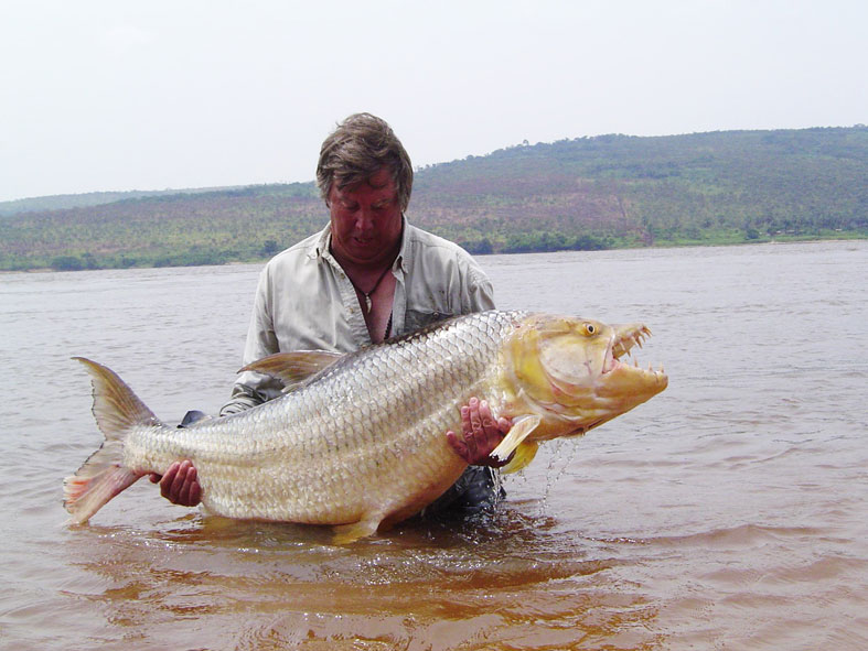 Big fishes of the world goliath tigerfish hydrocynus for Large ocean fish