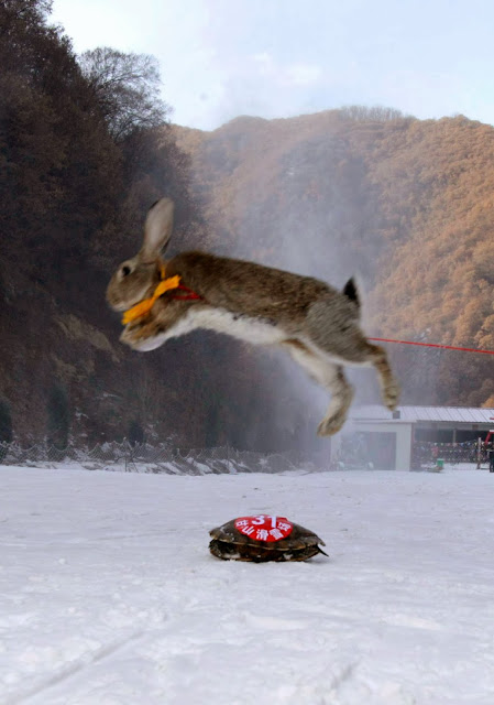 Pet Skiing Competition - Tortoise Beats Rabbit in Skiing