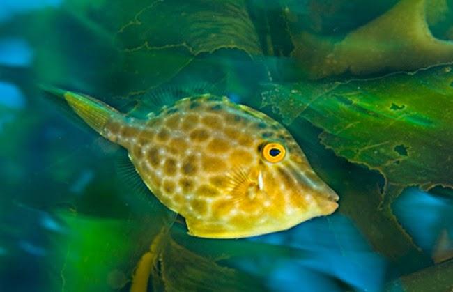 أجمل الأسماك الاستوائية الملونة   - صفحة 4 Colorful-tropical-fishes-25