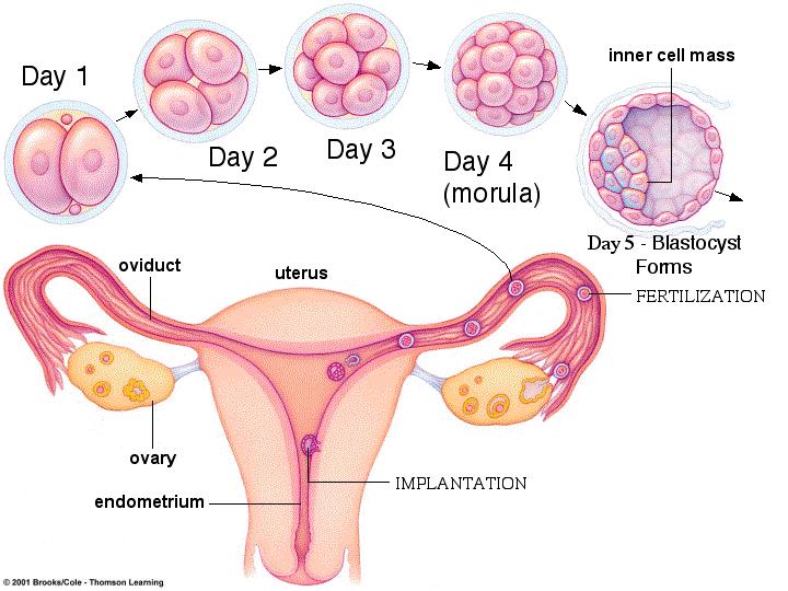bloedverlies tijdens zwangerschap 5 weken