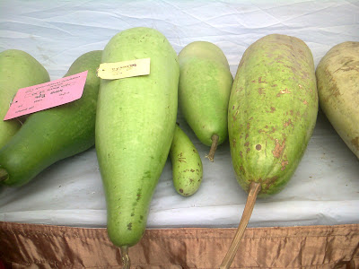 big dudhi bottle gourd vegitable exhibition
