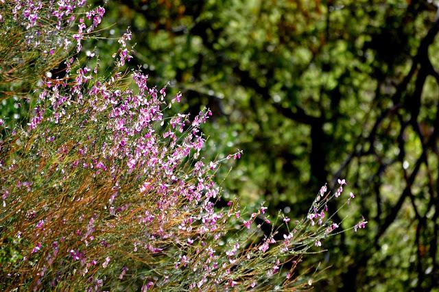 Bush of small purple flowers