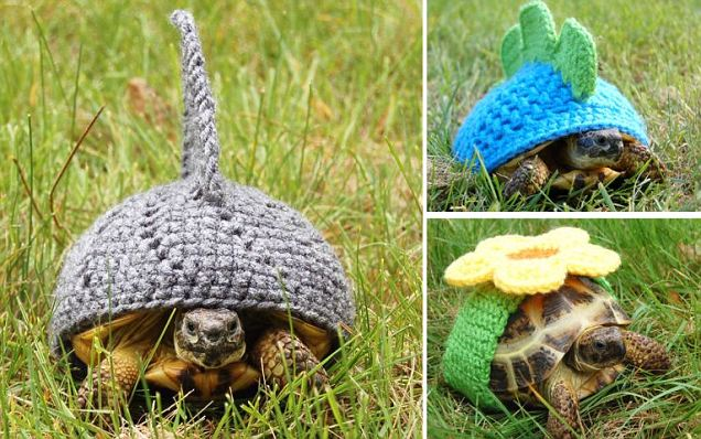 Knitting Pattern For Tortoise Jumper : Knitted Outfits for Tortoise Shell The Odd Blogg