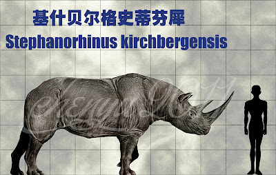Rhinocerotidae extinct Stephanorhinus