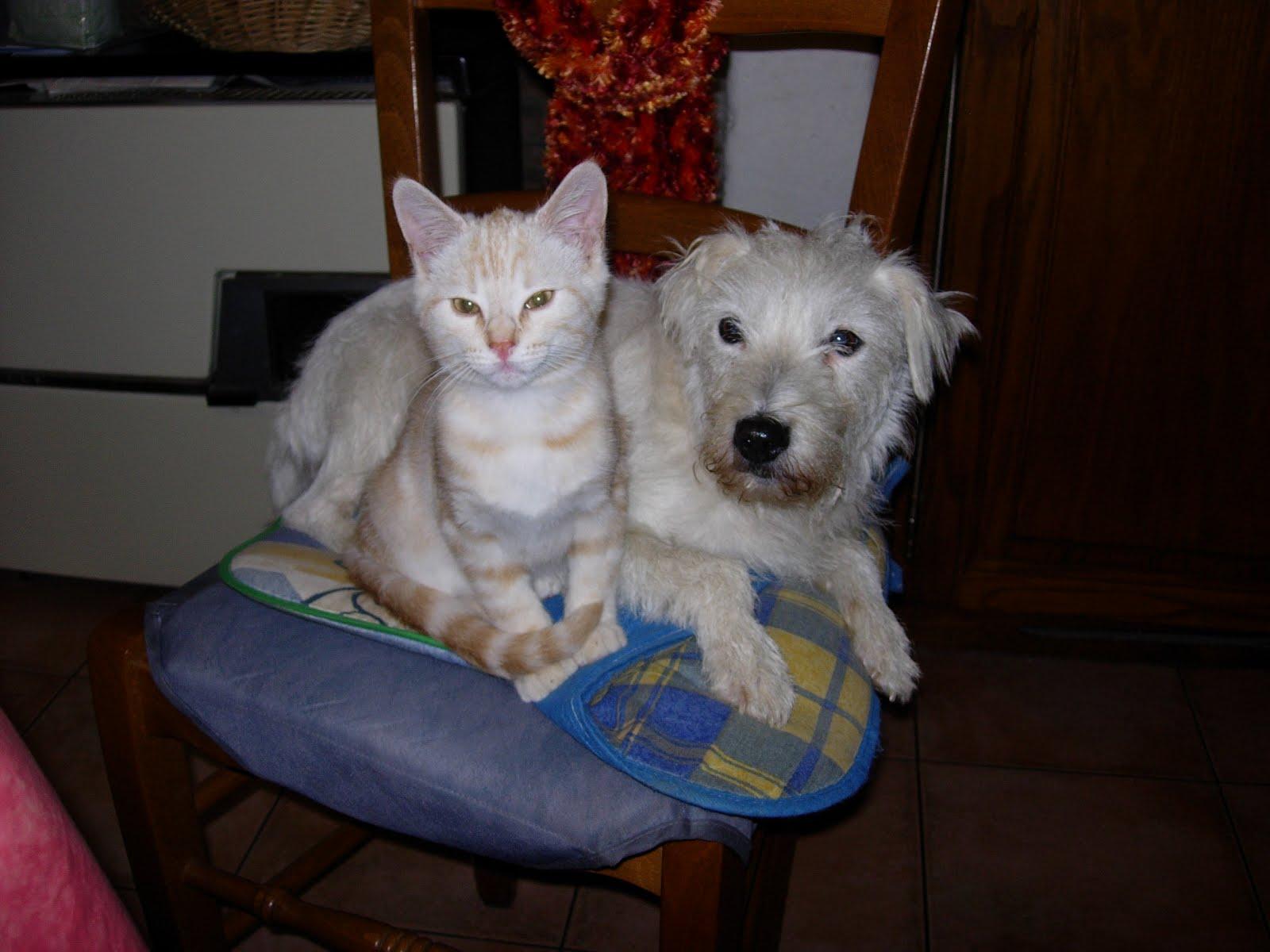 Chienne et Chaton
