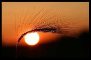 Espiga acariciada por el viento - Jauría - Sherline Chirinos Loaiza