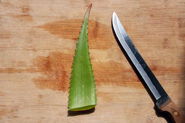 cut aloe vera leaf