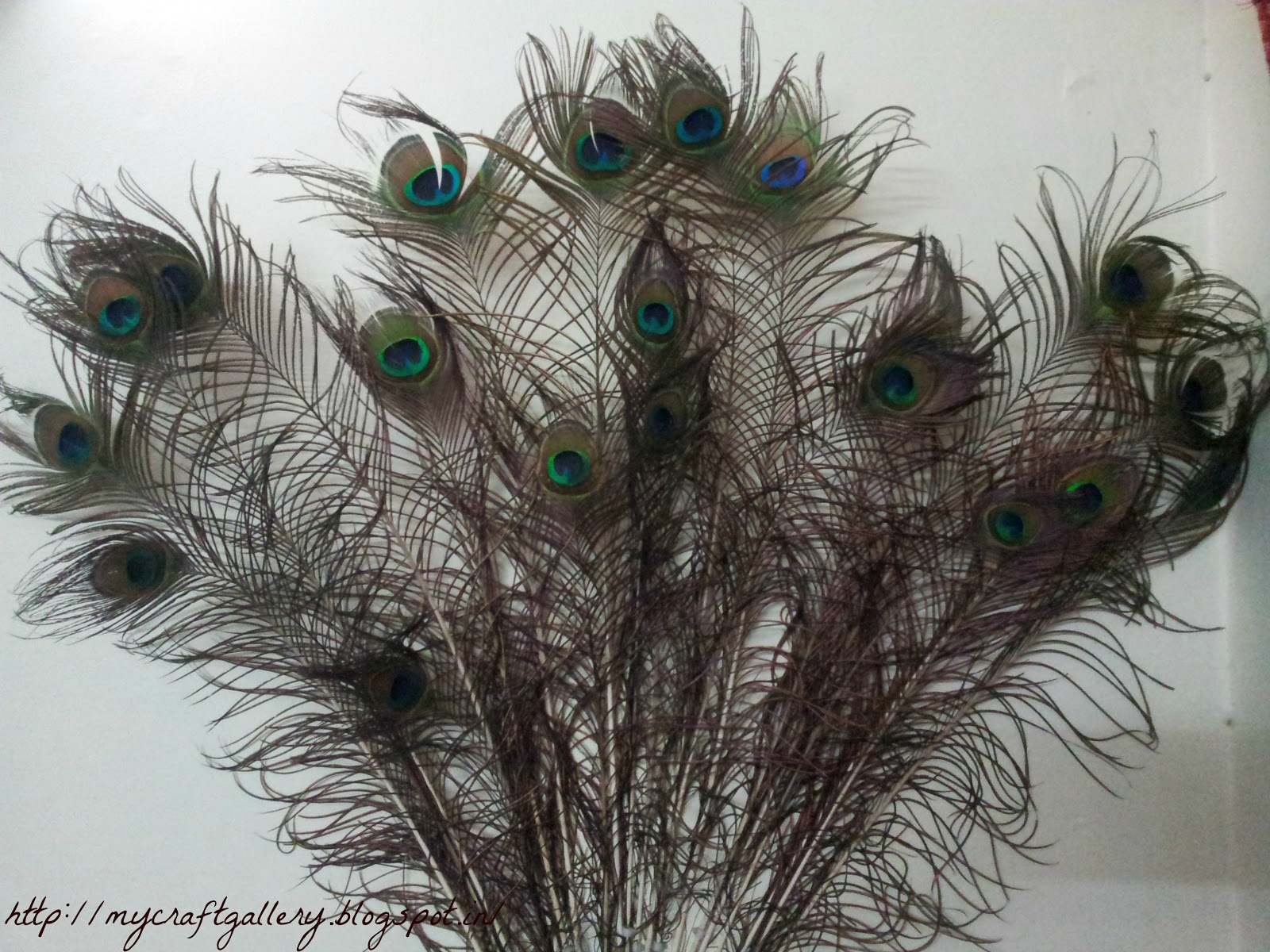 My craft gallery peacock feather ideas for Where can i buy feathers for crafts