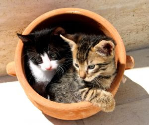kitties in a pot