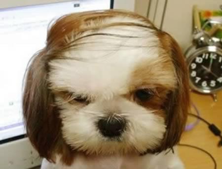 http://1.bp.blogspot.com/-QhdTldva0QA/TpKgF__1XNI/AAAAAAAABU0/IxK91GwHrG0/s1600/a97931_animal-hair_9-comb-over.jpg