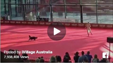 Dog dance ballet, dog ballet dancing