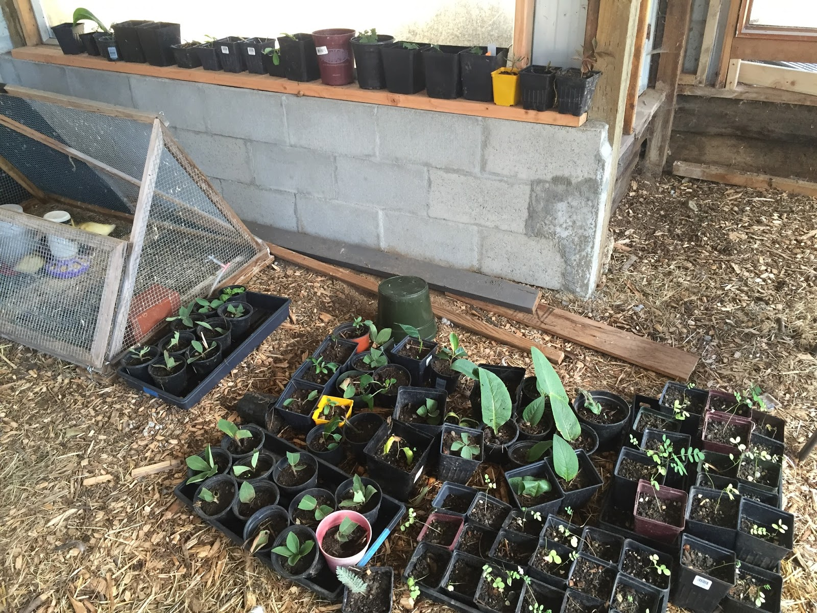 Propagation Misting Systems : Adventures with a tubie diy plant propagation misting