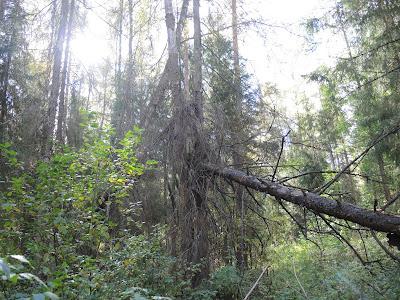 autumn.jpg, mushrooms.jpg, forest, выходные, лес, грибы, #грибы, грибочки, осень, золотая осень, клен, autumn, mushrooms, forest