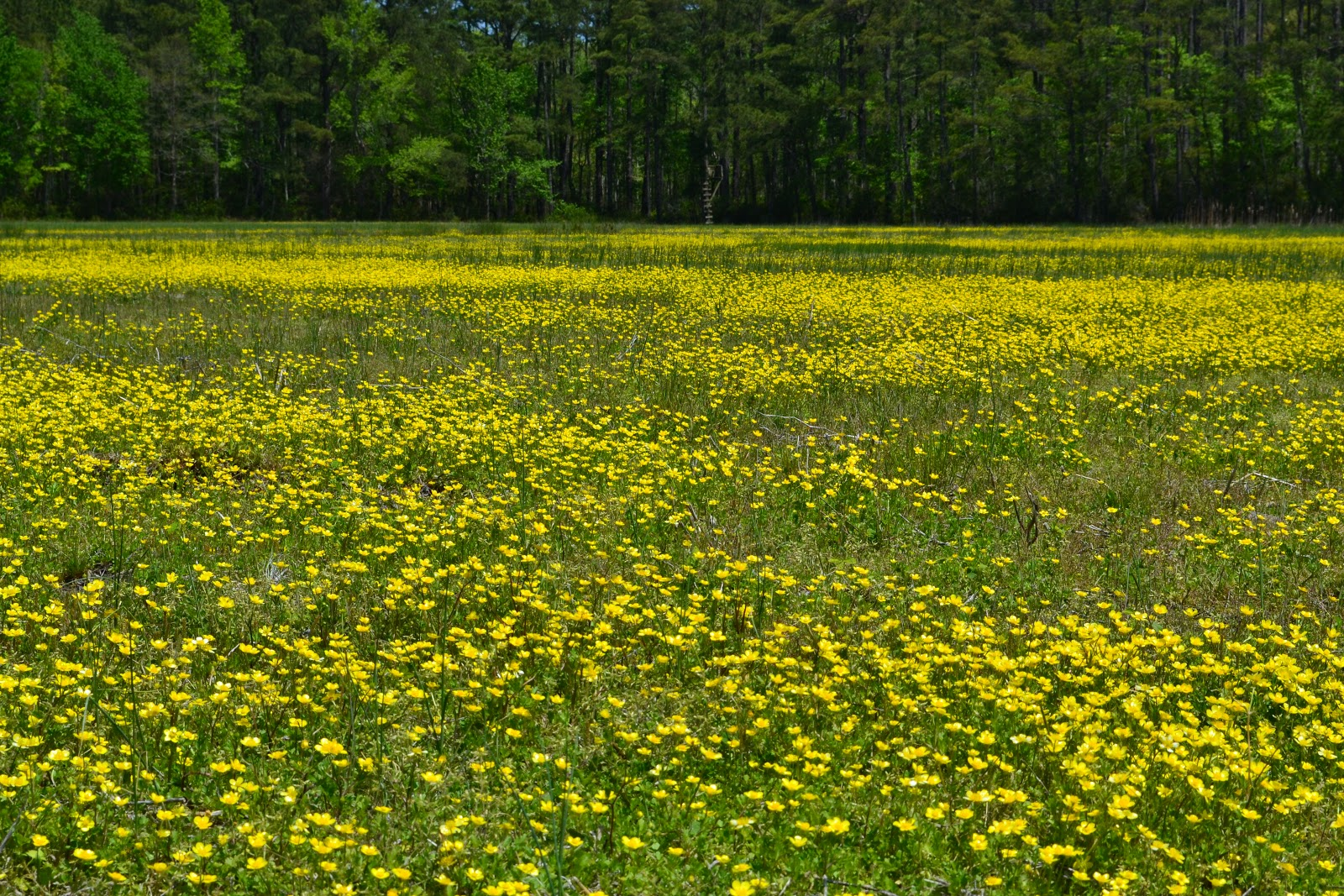 This Area Is A Great Place To Live In The Spring If Ones Favorite Color Yellow Many Types Of Wildflowers Are Blooming En Masse Along