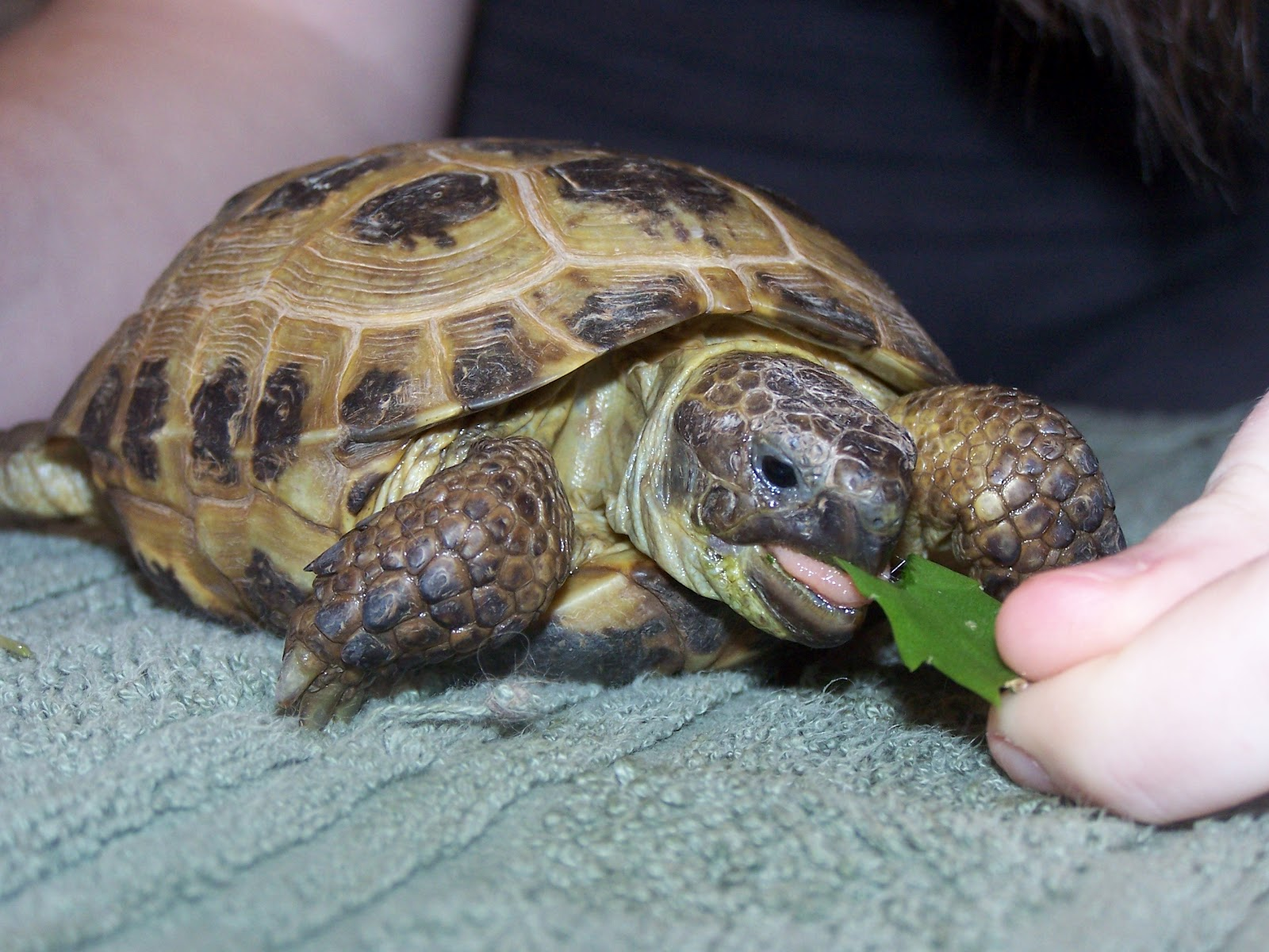 Displaying 19> Images For - Shell Less Turtle...