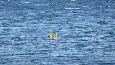 Αραχτοί σε τουρκική παραλία ξέχασαν το μωρό στη θάλασσα – Το βρήκε η ακτοφυλακή στη Λέσβο