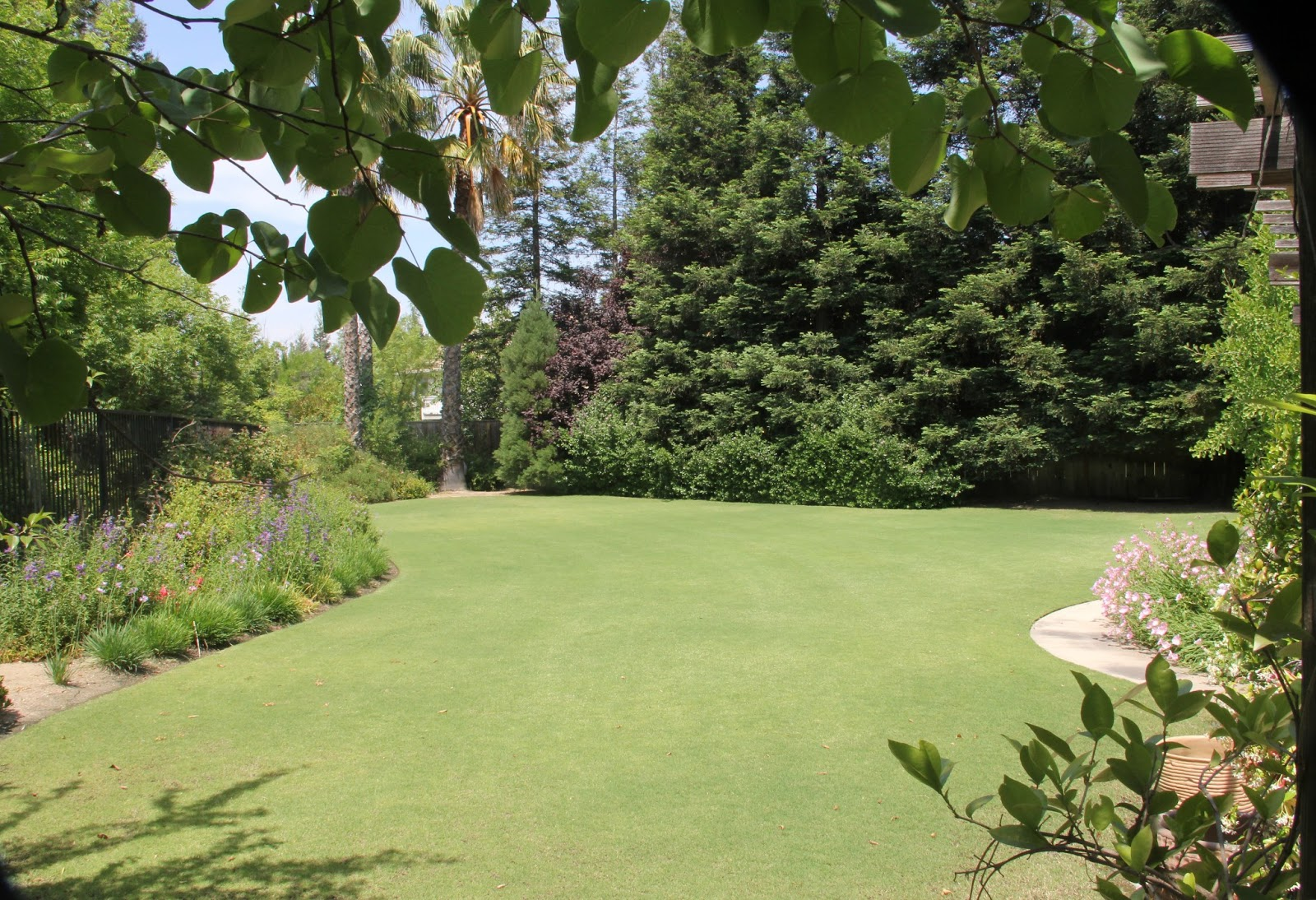 Landscaping With Bermuda Grass : Lawn and landscape tips from the turf doctor bermuda