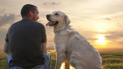 Cães foram domesticados há mais de 27.000 anos