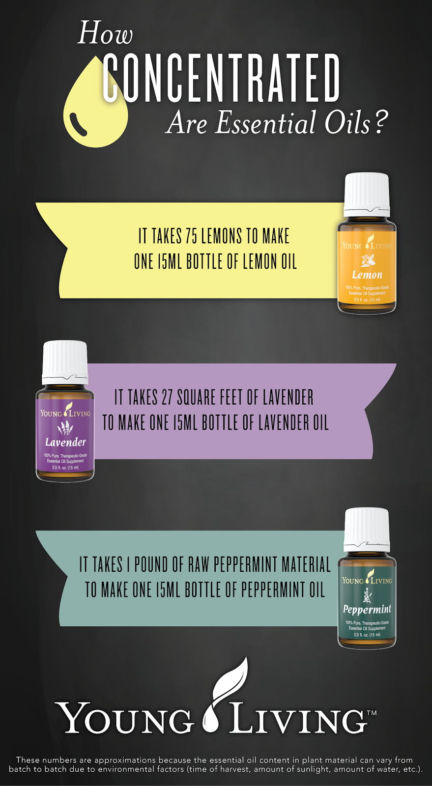 How Concentrated Are Essential Oils?