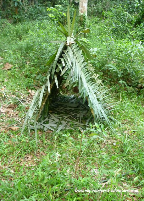 how to build a shelter in the jungle