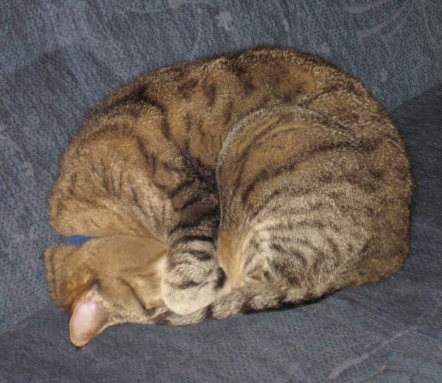 Kattfröken.