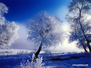 Beautiful snow/snowfall wallpaper, pictures, images, scene, nature