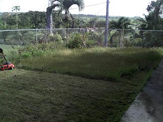 Overgrown Backyard