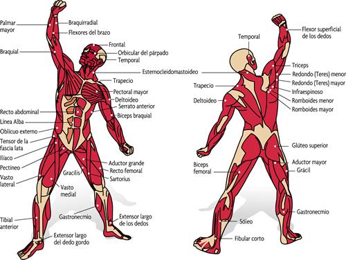 Atletas en el Poeta: El cuerpo humano