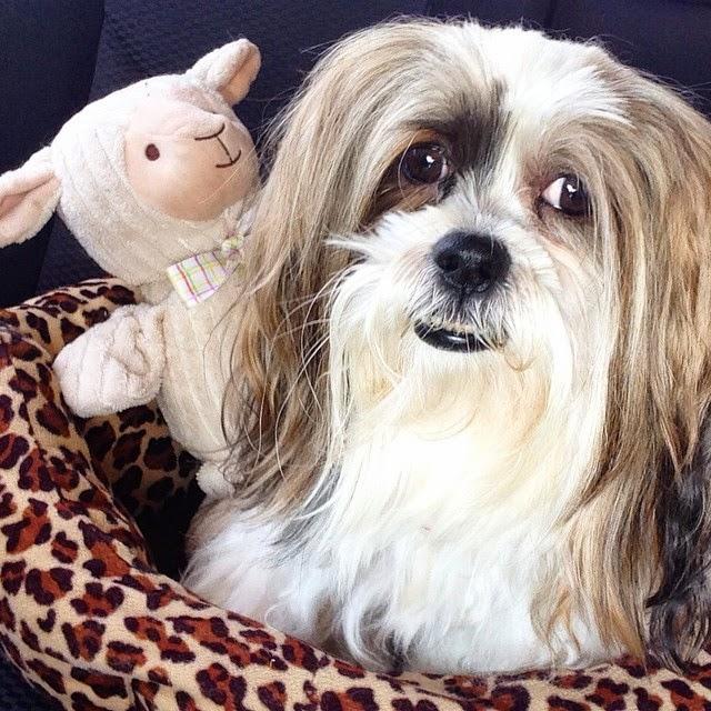 Chanel's Dental Surgery at Vets and Pets North Ryde