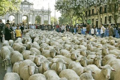 trashumancia, schapentocht