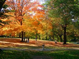 Curiosidades de las ciencias naturales por qu los for Como se llaman los arboles que no pierden sus hojas