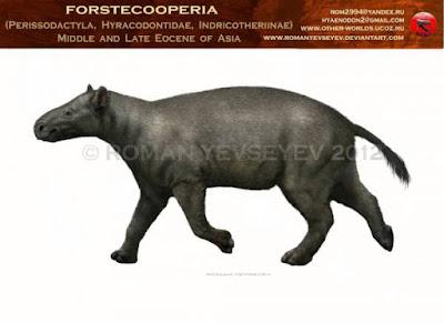 Forstercooperia
