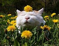 Обычных кошек не бывает