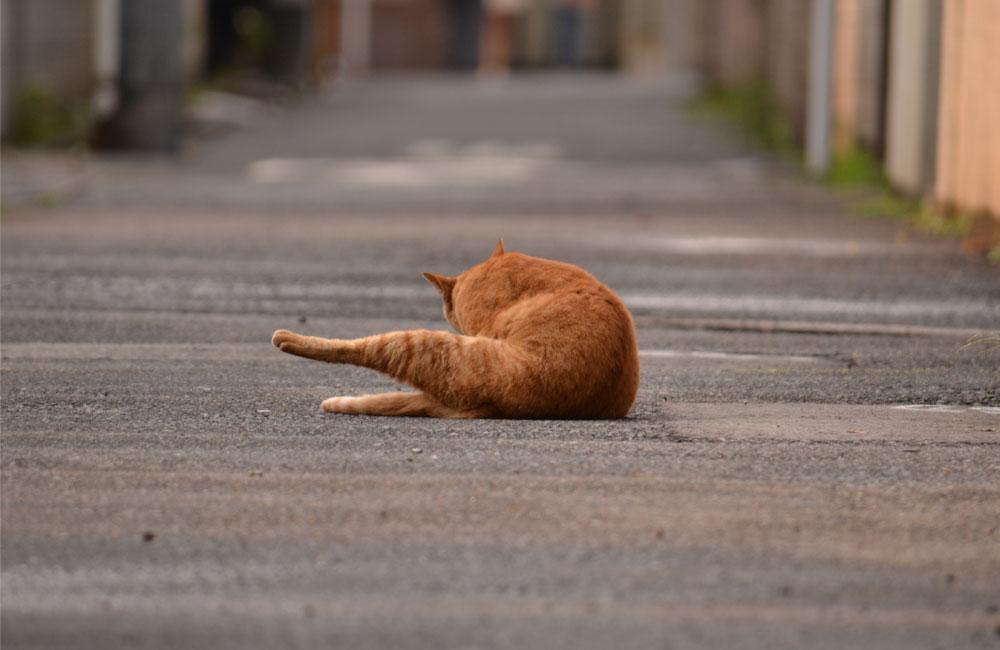 近所にいた猫の写真