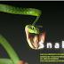 Snake ගේම් එක මෙන්න පරිගණකයටත්