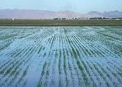 Jenis-Jenis Teknologi Pengairan Dalam Bidang Pertanian