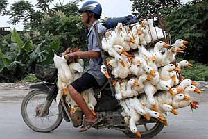 Imagenes Graciosas de Animales, Patos
