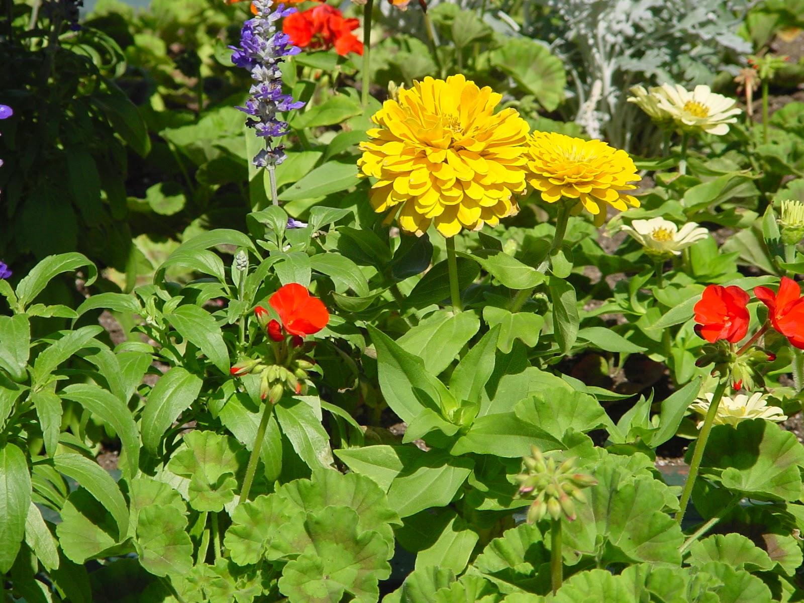 Jardineria eladio nonay enhorabuena a la selecci n - Jardineria eladio nonay ...
