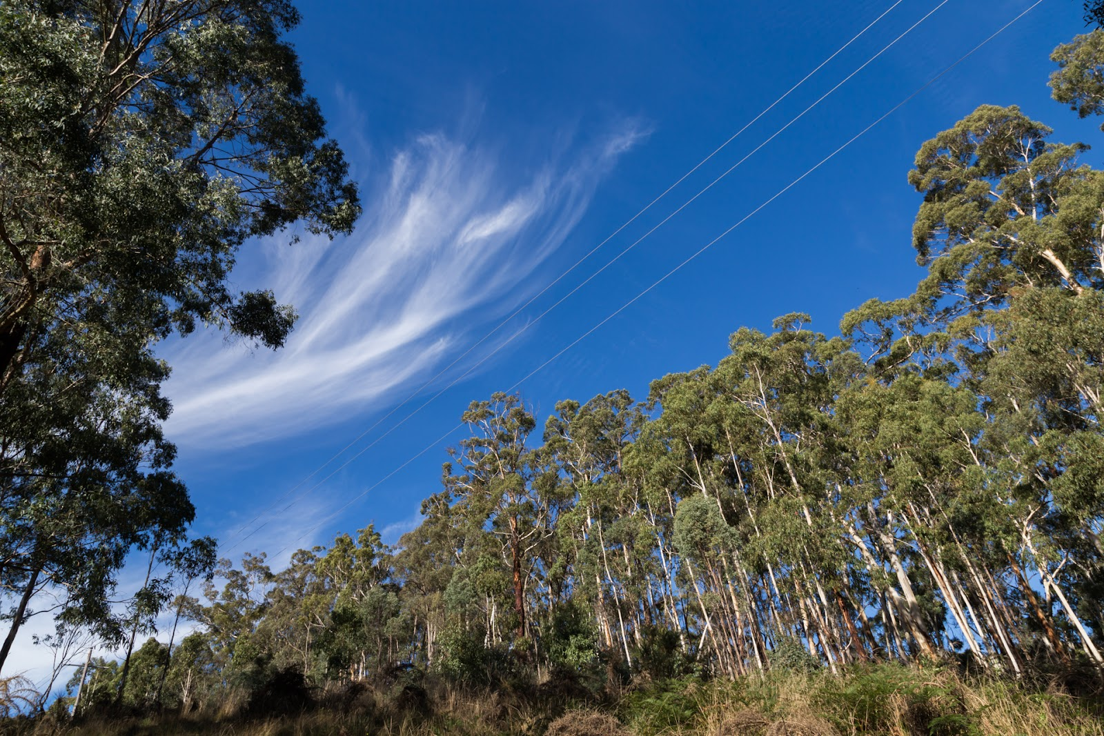 cirrus clouds above forest