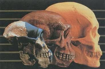 La Enfermedad de la Evolución del Aparato Masticatorio Humano