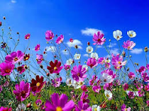 ¡¡¡Prima, prima, primavera!!!